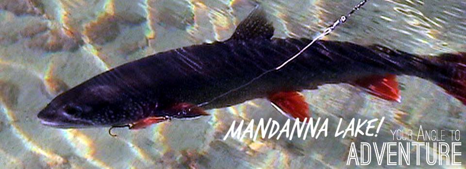 Mandanna Angle  Fish Gallery