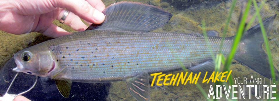 Teehnah Angle Fish