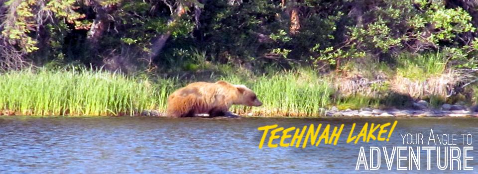 Teehnah Angle Gallery Bear