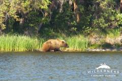Teehnah Lake Bear